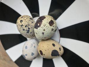 Bıldırcın Yumurtası Quail Eggs