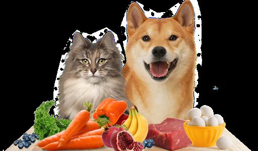 Tüylü Dostlarımızla Paylaşabileceğimiz Gıdalar