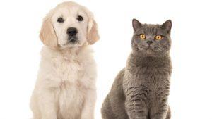 Epilepsi Kedi Köpek